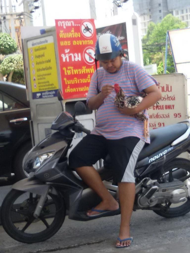 Chicken love Thailand