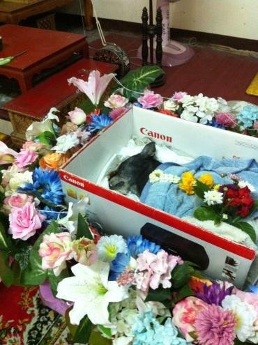 Animal funeral